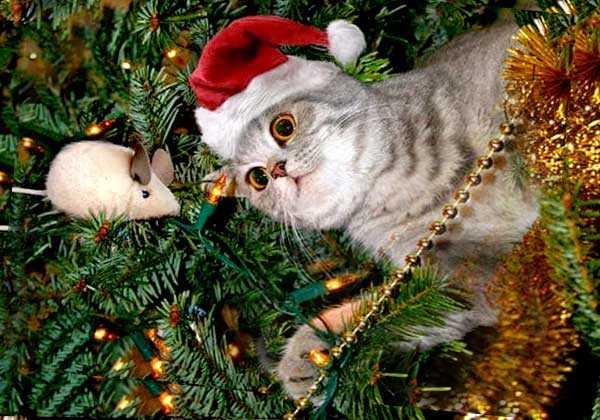новый год у котов