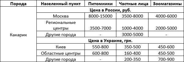 Стоимость попугая какарика