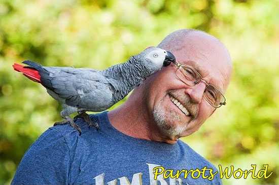 Попугай и хозяин