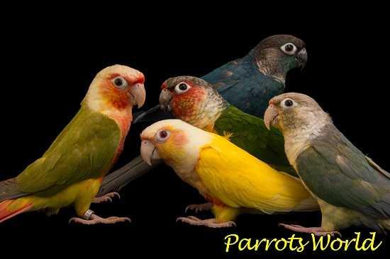 Попугаи разных окрасов