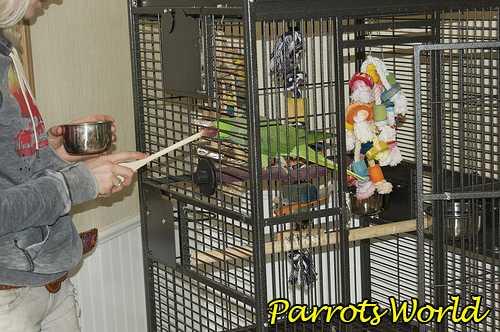 Клетка для ожерелового попугая