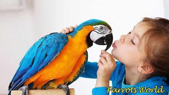 Ребёнок и попугай
