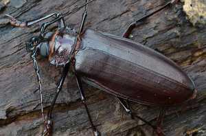 Полезные насекомые в саду