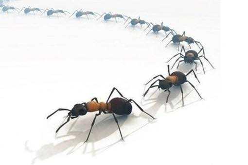 Как избавиться от красных муравьев в квартире или доме