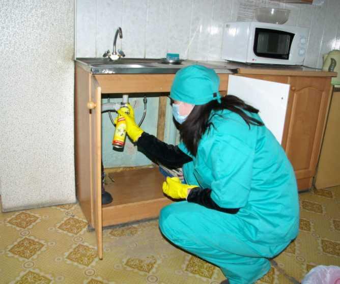 Навсегда избавиться от тараканов в общежитии