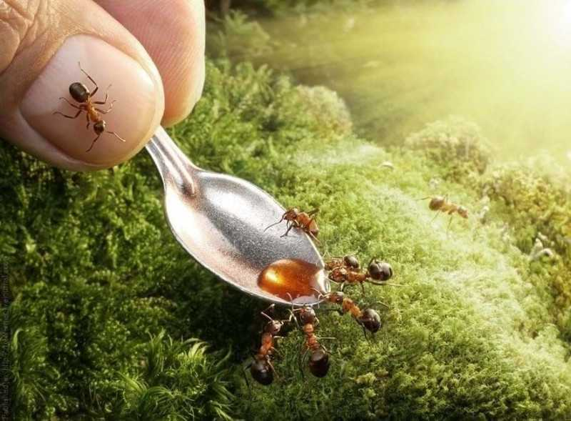 Великий Воин недорого отрубит голову вашим муравьям