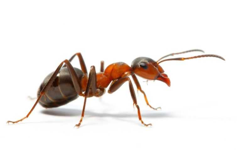 Зимовка муравьев подготовка и выживание