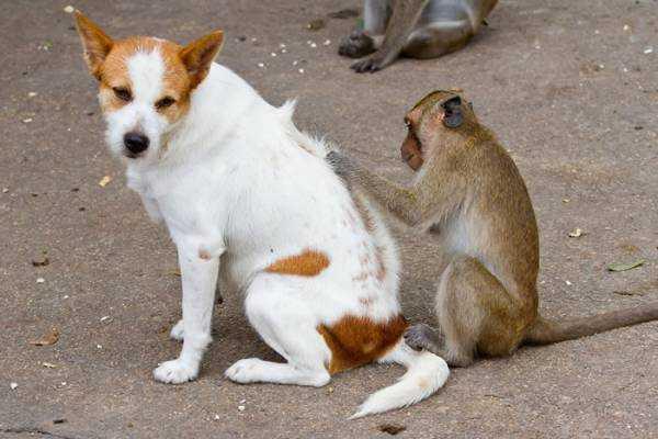 Как вывести блохи у собаки с помощью народных средств