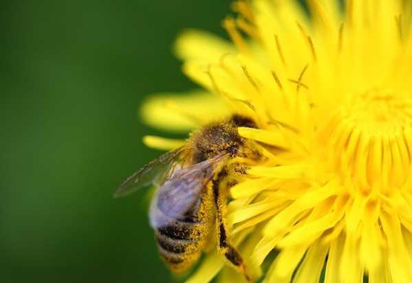 Как лечить зуд после укуса насекомых