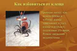 Куда сдать клеща на анализ в Москве - сохранение паразита после удаления, список лабораторий и стоимость