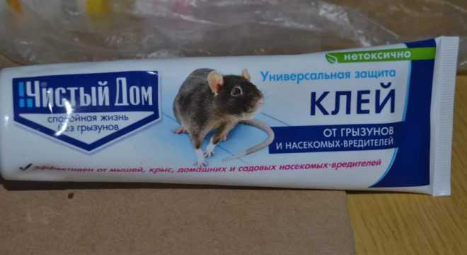 Клей от мышей как выбрать и чем оттереть
