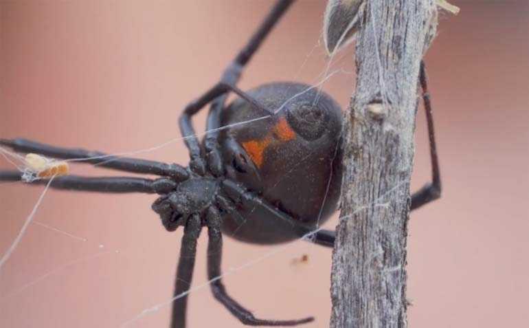 Топ-5 ядовитых и опасных насекомых в России