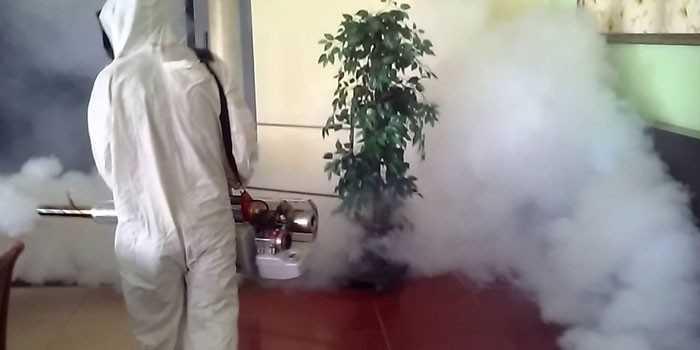 Как избавиться от тараканов без особых усилий