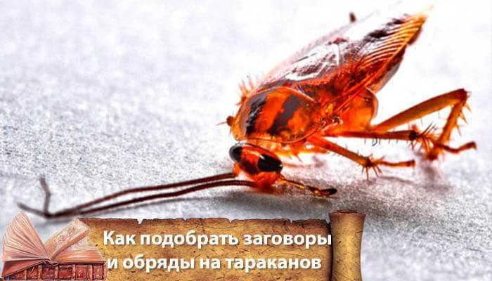 Как избавиться от тараканов навсегда заговорами