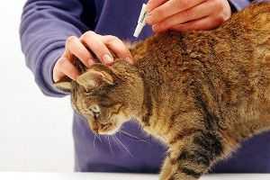 Капли, спреи, ошейники от блох и клещей у собак и кошек