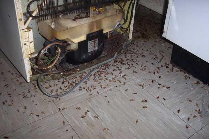 Как бороться с тараканами эффективно