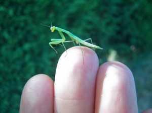 Самые интересные факты о насекомых