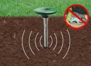 Как избавиться от полевки в саду