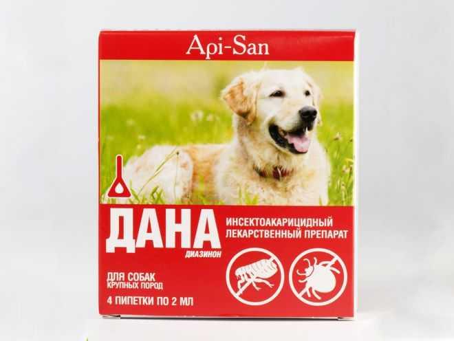 Как вывести блох у собаки - советы собаководам