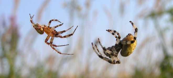 К чему снится много пауков ползающих по мне
