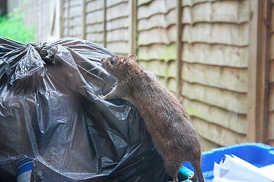 Лучшие средства от мышей