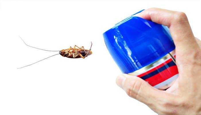 К чему снятся тараканы во сне для женщины