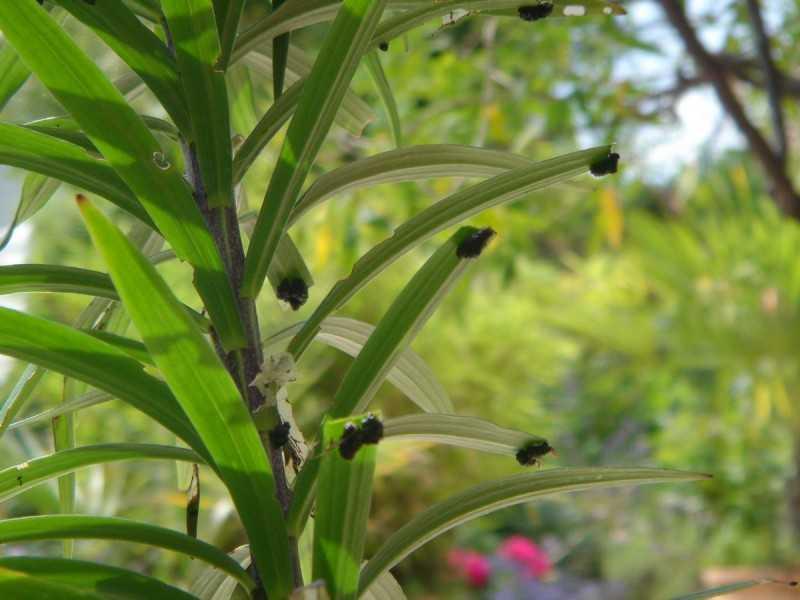 Защита сада от вредителей и болезней по всем культурам и на весь сезонНавигация по записям