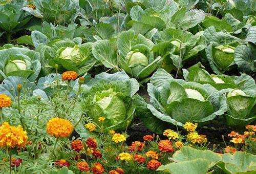 Борьба с гусеницами в саду и огороде