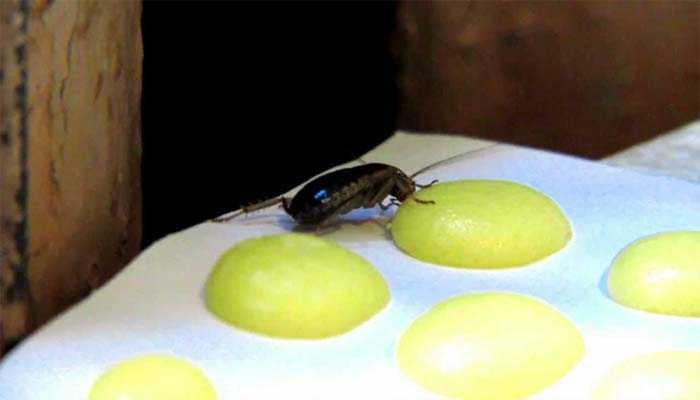 Как пользоваться дустом от тараканов