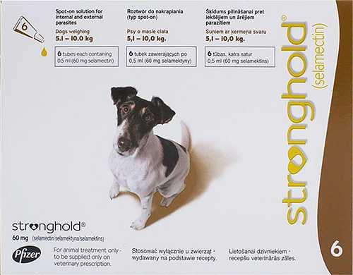 Заболевание педикулез вши у собак