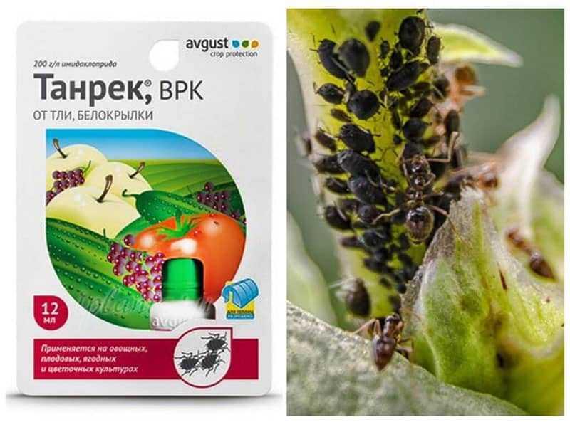 Инструкция по применению препарата Танрек от колорадского жука