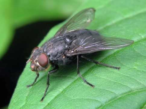 Дачный участок10 проверенных способов борьбы с луковой мухой