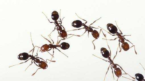 Как вывести муравьёв из квартиры
