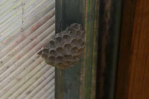 Укус осы. Как избежать Что делать