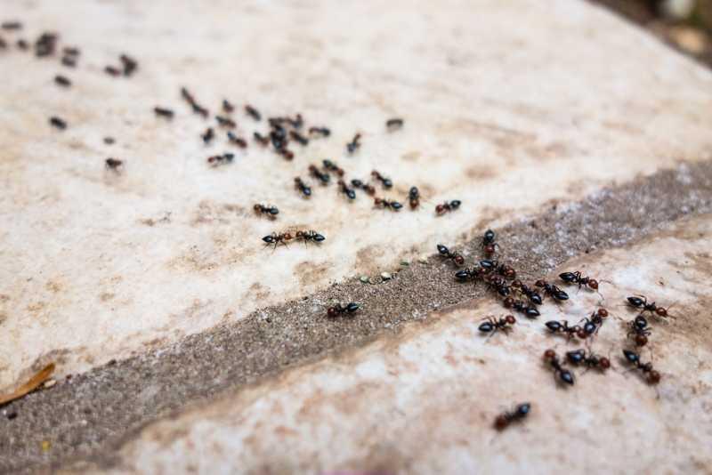 Как бороться с муравьями в доме проверенные средства