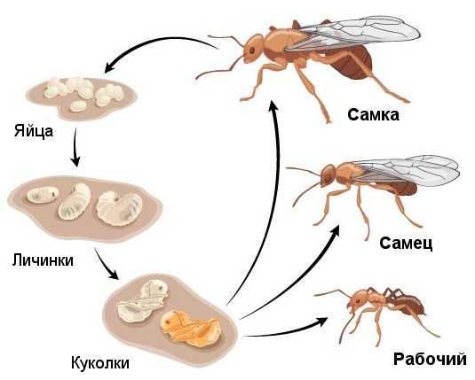 Помощь по Теле2, тарифы, вопросы Сколько весит муравейСколько весит муравей