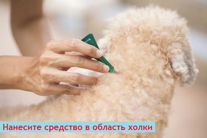 Как вывести власоедов у собак, чем они опасны и какие есть народные средства