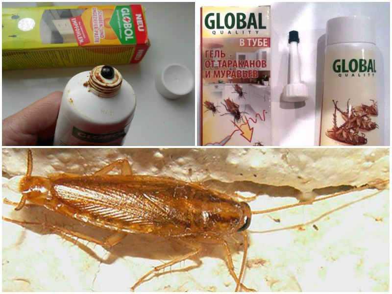 Гель от тараканов Глобал обзор