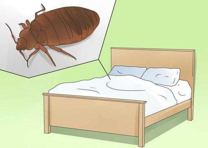 Как вывести постельных клопов Самый эффективный способ