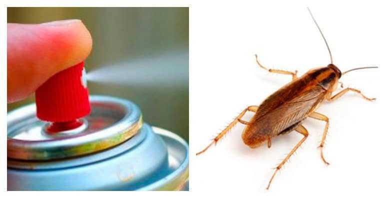 Помогает ли дихлофос от тараканов