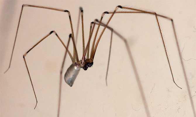 Как бороться с белыми насекомыми в квартире