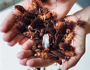 Поможет ли от тараканов Комбат
