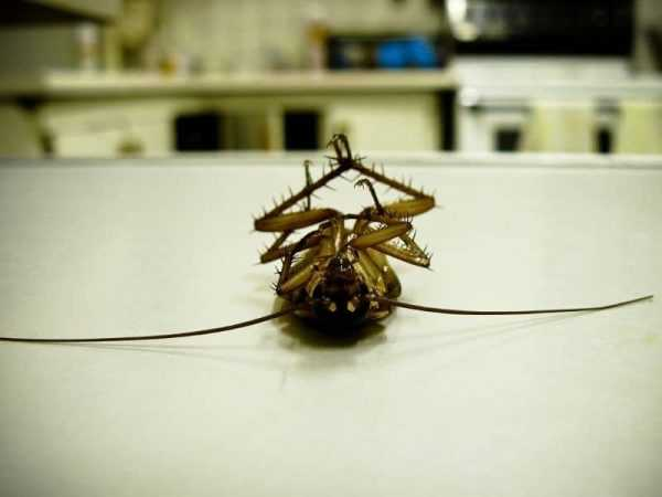 Инсектицидное средство от мух Агита инструкия