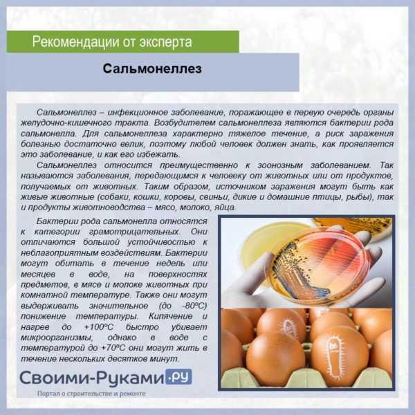 Лечение пероеда у кур народными средствами
