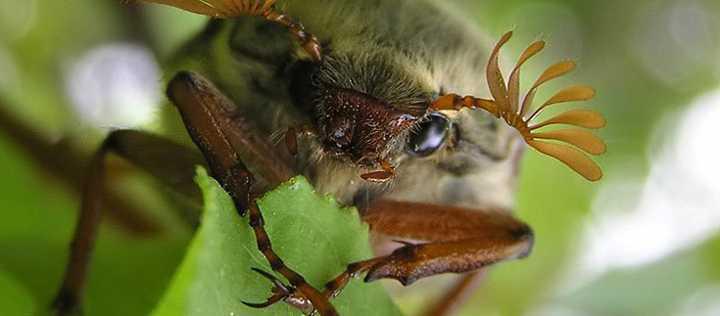Июньский жук фильм