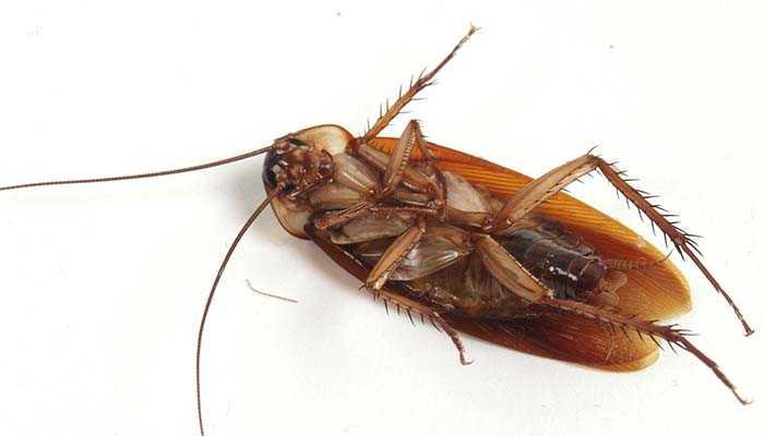 Уничтожаем тараканов спреем Барон