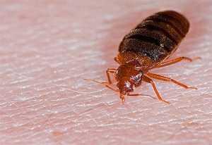 Заклинательная молитва от всяких насекомых вредителей