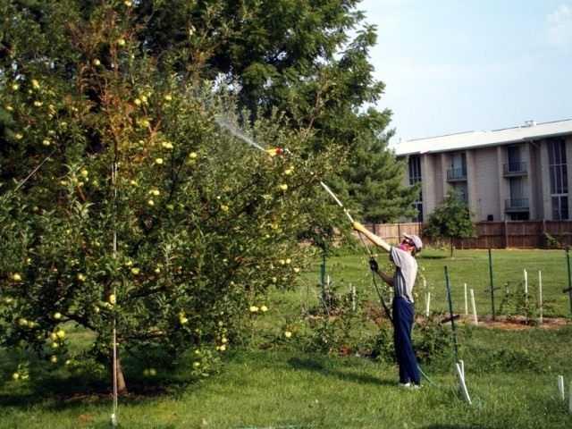 Маленькие, но очень опасные - вредители яблони