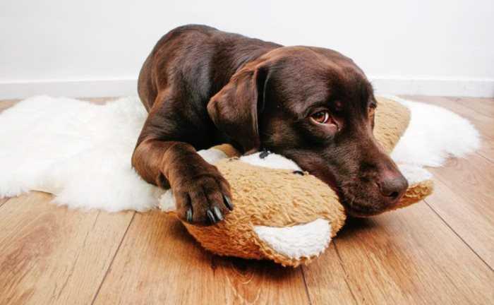Чистотел для собак инструкция по применению, отзывы