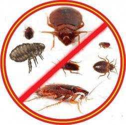 Как бороться с насекомыми, появляющимися от сырости